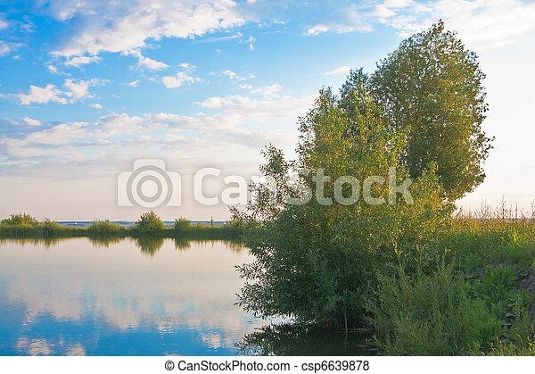 étang, saules, côte - csp6639878