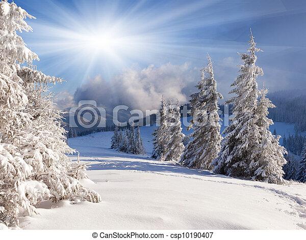 beau, hiver, arbres., neige a couvert, paysage - csp10190407