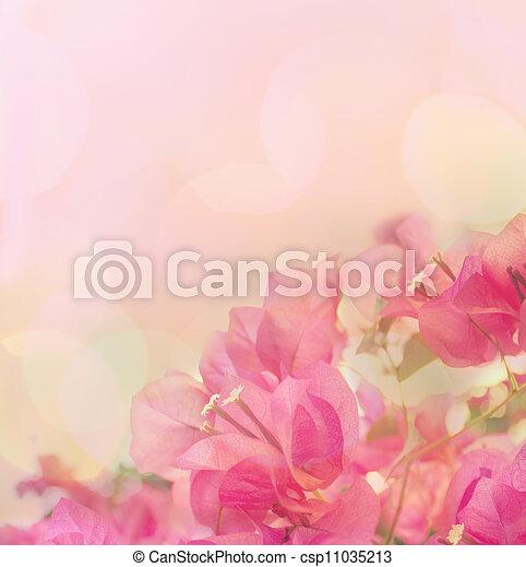 beau, rose, résumé, flowers., conception, fond, frontière florale - csp11035213