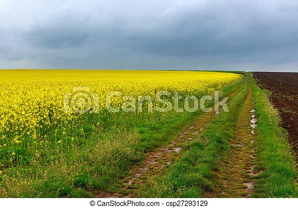 champs, route, canola, terre - csp27293129