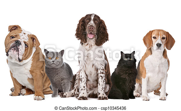 chats, chiens, groupe - csp10345436