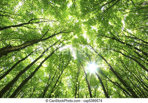 fond, arbres verts - csp5389574