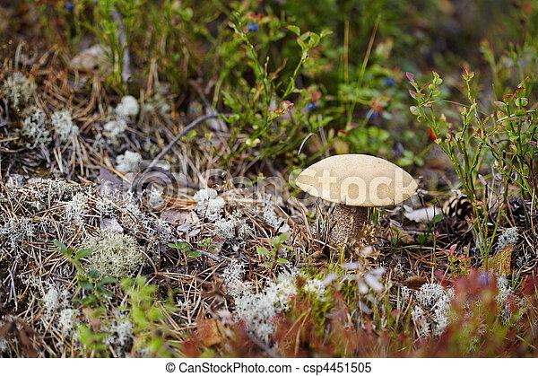 lichen, champignon, mousse - csp4451505
