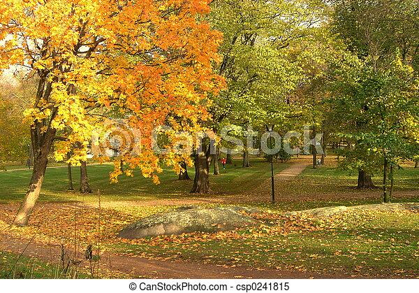 parc, automne - csp0241815
