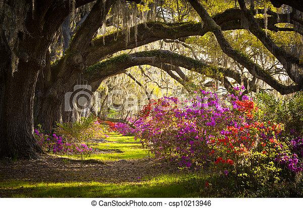 printemps, espagnol, chêne, arbres, plantation, vivant, azalée, mousse, fleurir, sc, charleston, fleurs, fleurs - csp10213946